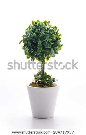 Pot plant isolated on white - stock photo