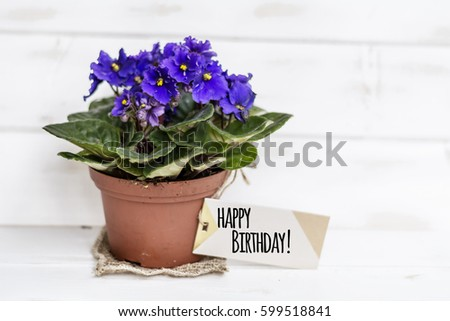 Pot Violet Flowers Birthday Gift Message Stock Photo Edit Now