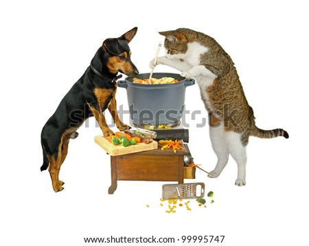 Pot Watcher, dog and cat are cooking