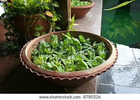 Pot with floating plants in Balinese architectural style