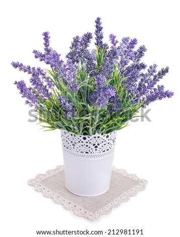 pot with lavender isolated on a white background - stock photo