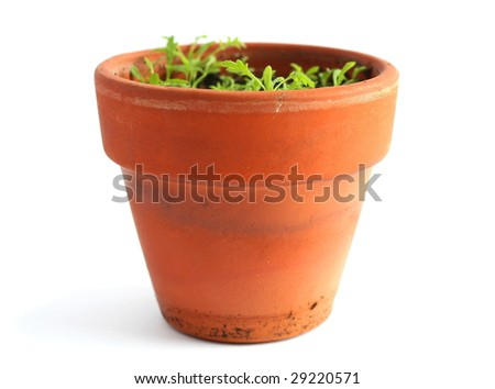 Pot with small plant - stock photo