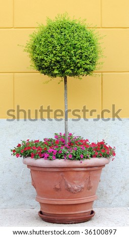 pot with small tree