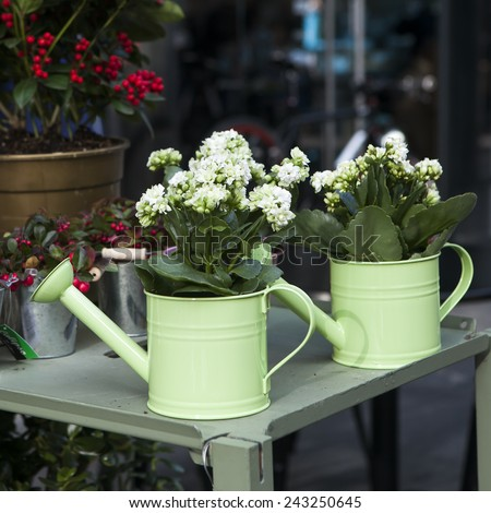 pot witn kalanchoe on the white chair as a decoration of the garden - stock photo