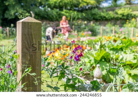 potager in cornwall england trerice - stock photo