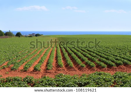 Potato field in the red sands of Prince Edward Island, Canada, with the Northumberland Strait in the background - stock photo