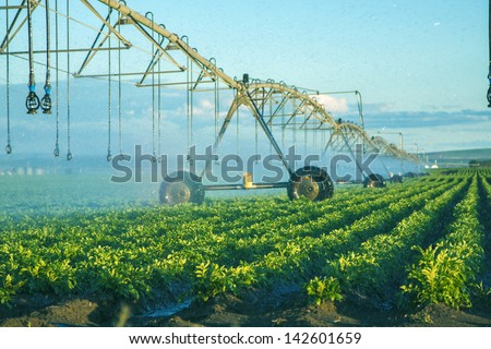 potato field irrigated by a pivot sprinkler system - stock photo
