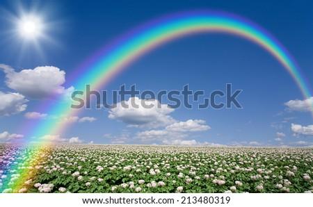 Potato field with sky and rainbow - stock photo