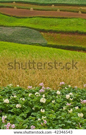 Potato fields with colourful terraced fields in background (3)