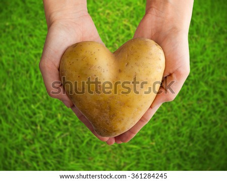 Potato shaped heart in the female hands on green grass - stock photo