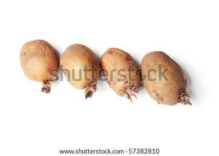 Potato tubers ready for planting in a ground, isolated on a white background - stock photo
