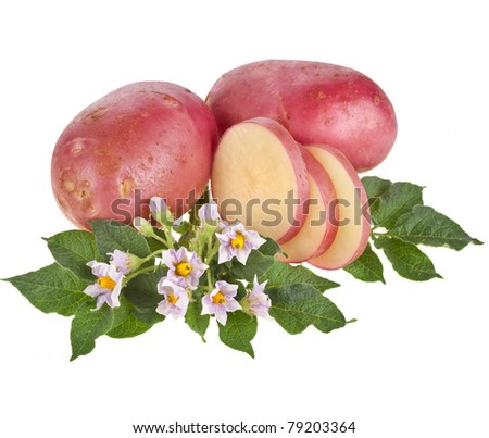 potato with leaves - stock photo