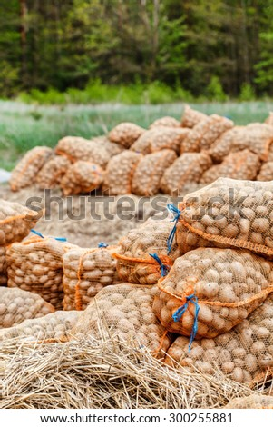 potatoes in the bags at farmers market - stock photo