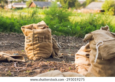 potatoes in the garden in the bag