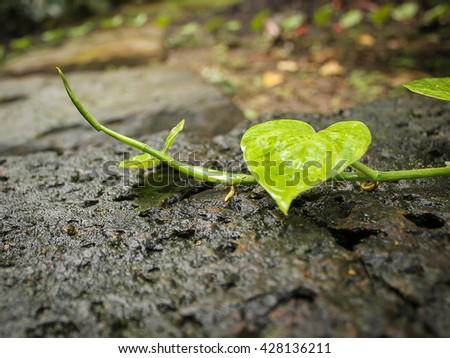 pothos leaf on wet floor - stock photo