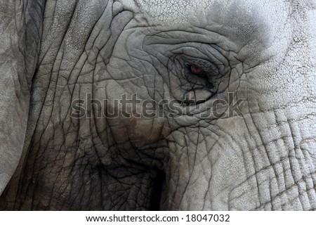 Potrait of an Elephant - stock photo