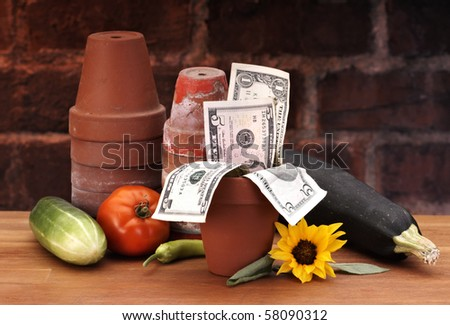 Pots with growing money - stock photo