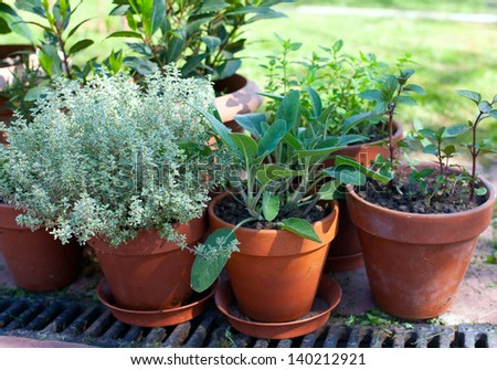 pots with herbs - stock photo