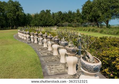 Potted bonsai tree, A rows on grass / Gorgeous garden - stock photo