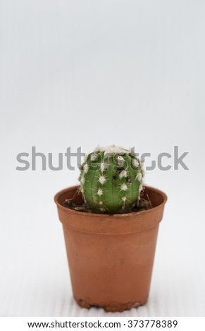 Potted cactus, red and white background.