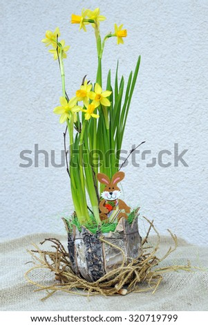 Potted daffodils as an Easter surprise. - stock photo