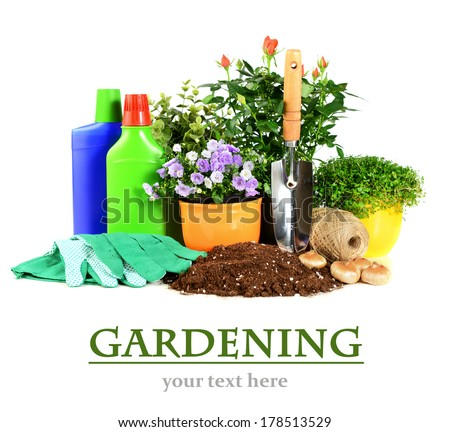 potted flowers and garden tools on a white background, concept of gardening