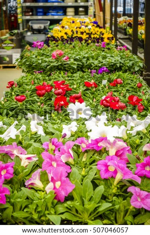 Potted flowers plants on display home stock photo 507046057 potted flowers and plants on display at a home improvement store in spring mightylinksfo