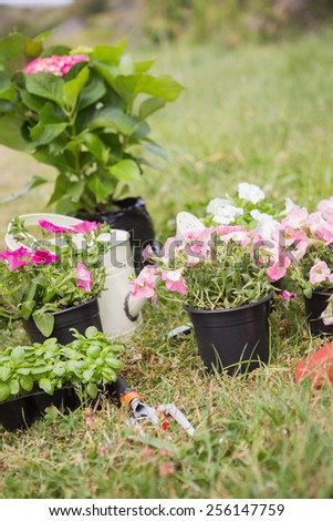 Potted flowers ready to be planted on a sunny day