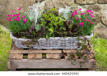 Potted garden plants like carnation and painted nettle in a basket in front of a stone wall.
