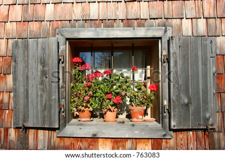 Potted geraniums in a window - stock photo