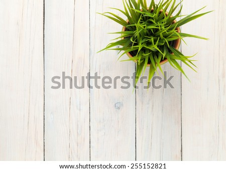 Potted grass flower over wooden table background with copy space - stock photo