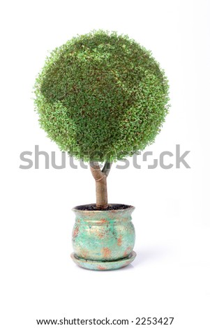 Potted green globe plant over white background - stock photo
