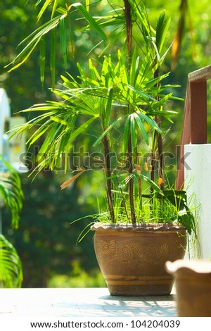 potted green plants on wooden patio table - stock photo