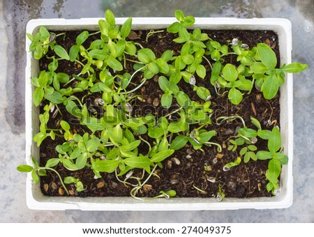 Potted growing seed in tropical garden  - stock photo