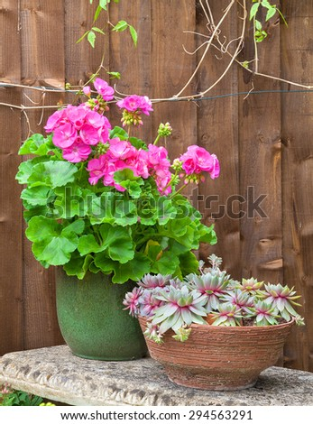 Potted pink geranium and house leeks on a stone garden bench. - stock photo