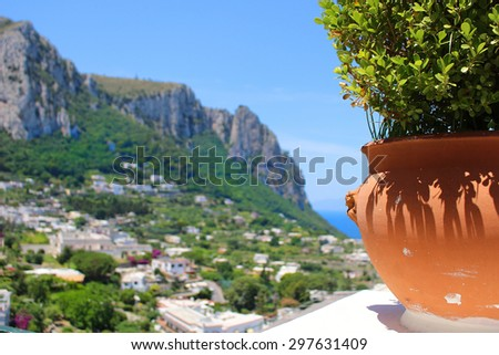 Potted plant  on the cliff overlooking the town of Capri  (focus on plant) - stock photo