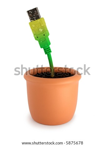 Potted plant with ripely green-yellow usb cable. Isolated on white. - stock photo