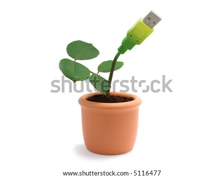 Potted plant with usb cable isolated - stock photo