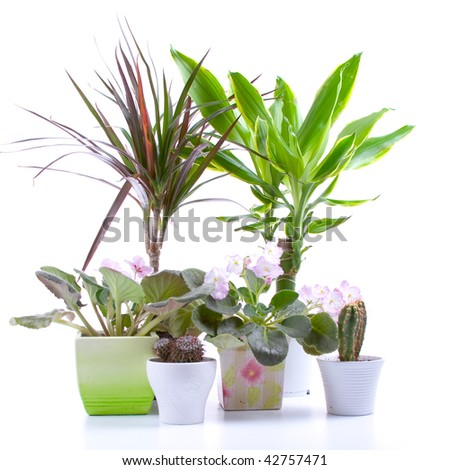 Potted plants  in a pot on a white background