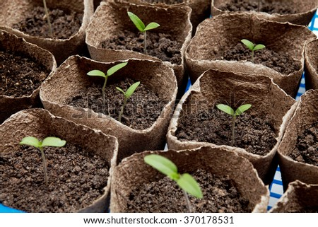 Potted Seedlings - stock photo