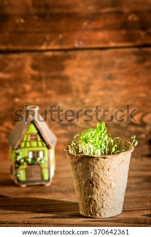 Potted seedlings growing in biodegradable peat moss pot and ceramic house on wooden background  - stock photo