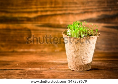 Potted seedlings growing in biodegradable peat moss pot on wooden background  - stock photo