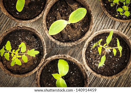 Potted seedlings growing in biodegradable peat moss pots from above - stock photo