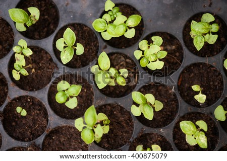Potted seedlings growing in biodegradable peat moss pots from above. - stock photo