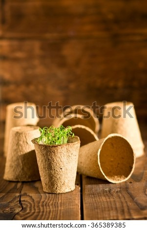 Potted seedlings growing in biodegradable peat moss pots on wooden background  - stock photo