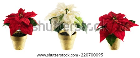 Potted silk floral poinsettias for Christmas and holiday themes. Isolated on white; use as a border or individual plants as design elements.  - stock photo
