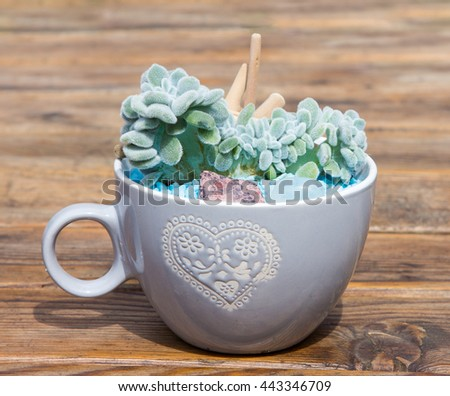 Potted succulent in a coffee pot for indoor table decoration. - stock photo