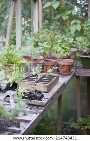 Potting crate on workbench in greenhouse - stock photo