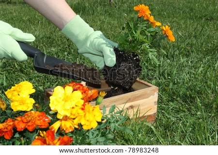 Potting flowers outdoors during spring - stock photo