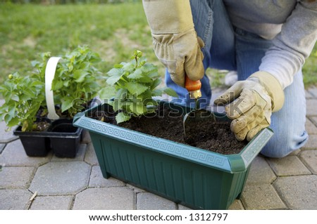 Potting Plants in the Garden - stock photo
